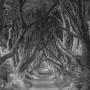 Ireland_Dark-Hedges-sw