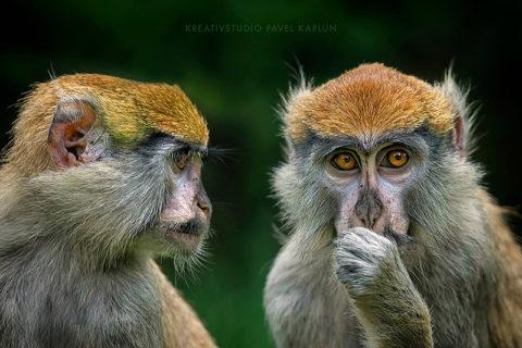 Tierfotografie im Zoo, © Pavel Kaplun