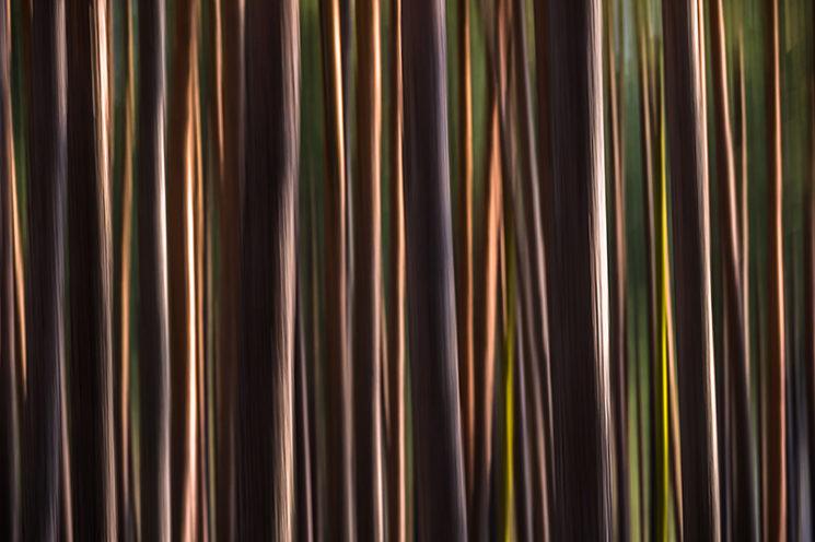 Kreative Aufnahmetechniken, ©Hans-Peter Schaub