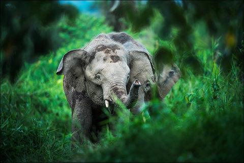 Borneo, ©Florian Smit