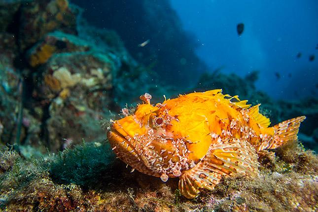 Unterwasserfotografie © Oliver Jung