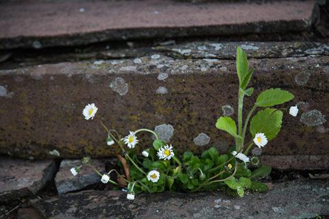 Wildnis vor der Haustür - Naturfotografie, ©Olszewski / Giefer