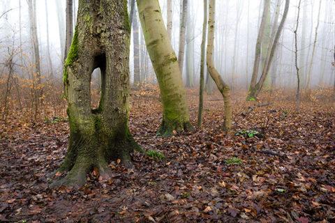 Naturfotografie im Winter; ©Olszewski / Giefer
