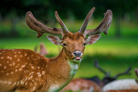 Meisterliche Tierporträts, © Kreativstudio Pavel Kaplun