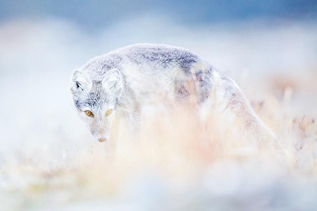 Innovative Naturfotografie (c) Florian Smit