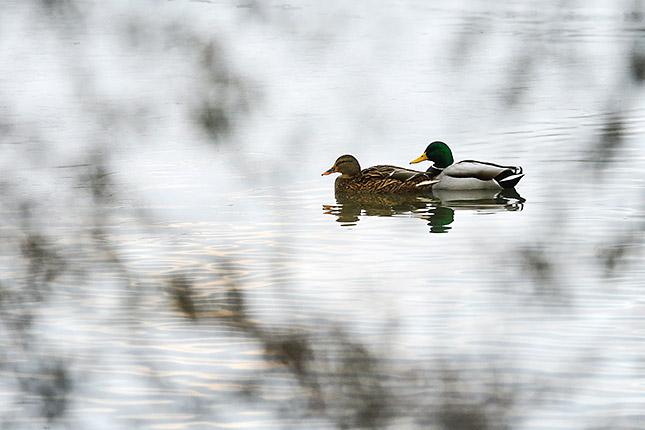 Kreative Möglichkeiten in der Naturfotografie; © Markus Botzek
