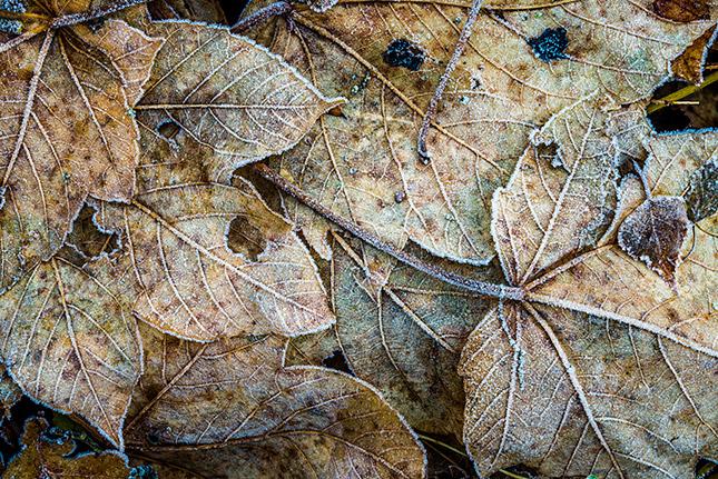Wunder am Wegrand - Makrofotografie; © Hans-Peter Schaub