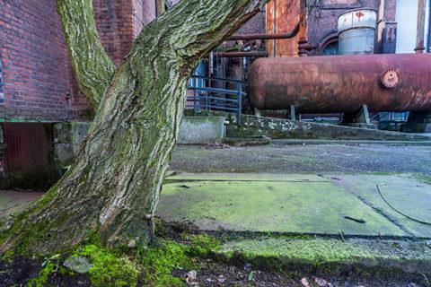 Landschaft – Industrie – Natur: Naturfotografische Entdeckungstour in einer Industrielandschaft, © Hans-Peter Schaub