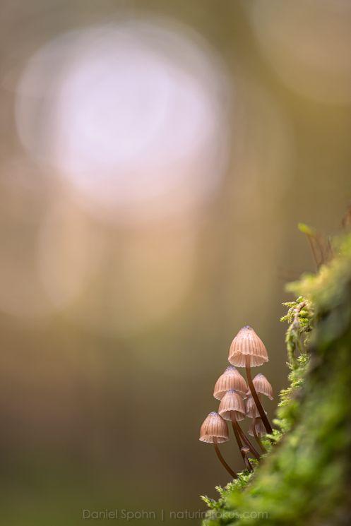 Kreative Naturfotografie im Herbst